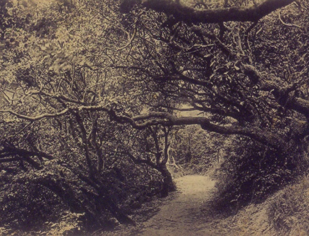 euroArt: The famous Manteling Woods at Domburg ca. 1900